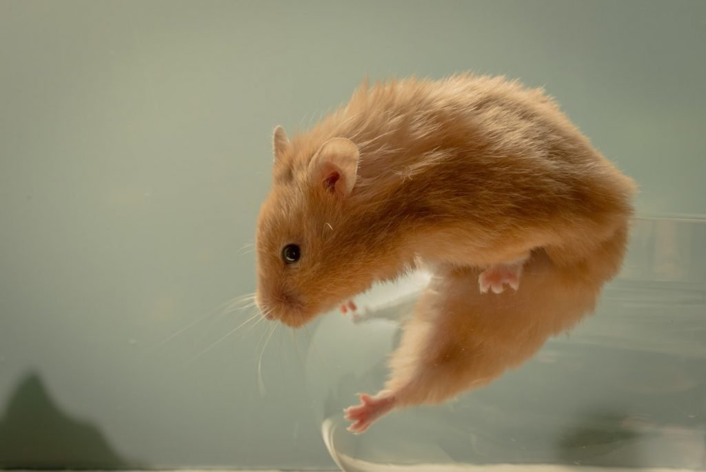 How Do Hamsters Escape From Their Cages