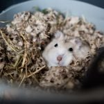 How Do Hamsters Escape From Their Cages? (And The Best Way To Stop Them!)