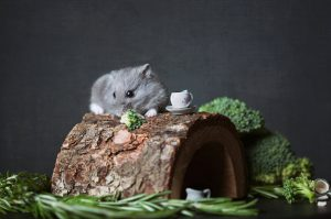 How To Move Hamster To New Cage