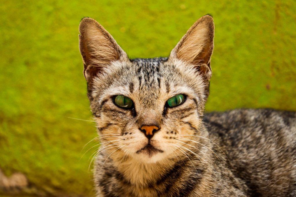 How To Stop Cat Zoomies