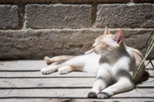 Remove Cat Claw Sheath