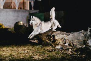 Dog Afraid To Go Outside At Night