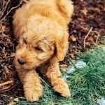 Reasons Why Puppy Plays Outside Instead Going Potty (And How To Help!)