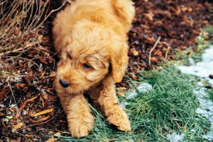 Puppy Plays Outside Instead Going Potty