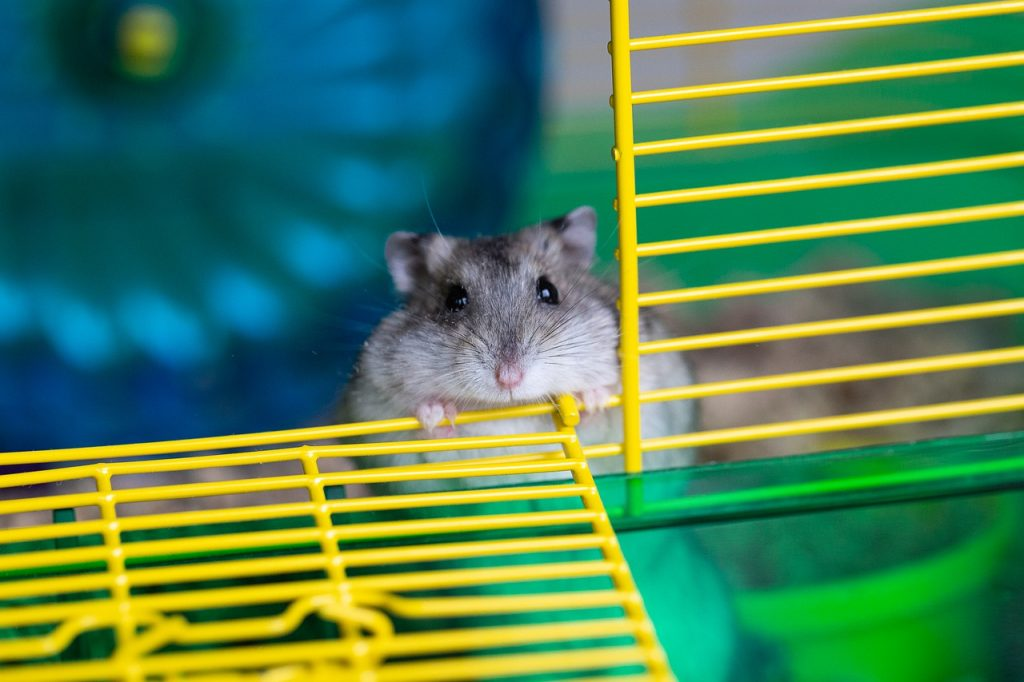 How To Stop Hamster From Climbing Cage