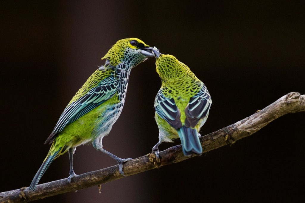 Can You Use Reptile Lights For Birds