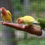 Can Lovebirds Eat Celery? (And Which Food is Best!)