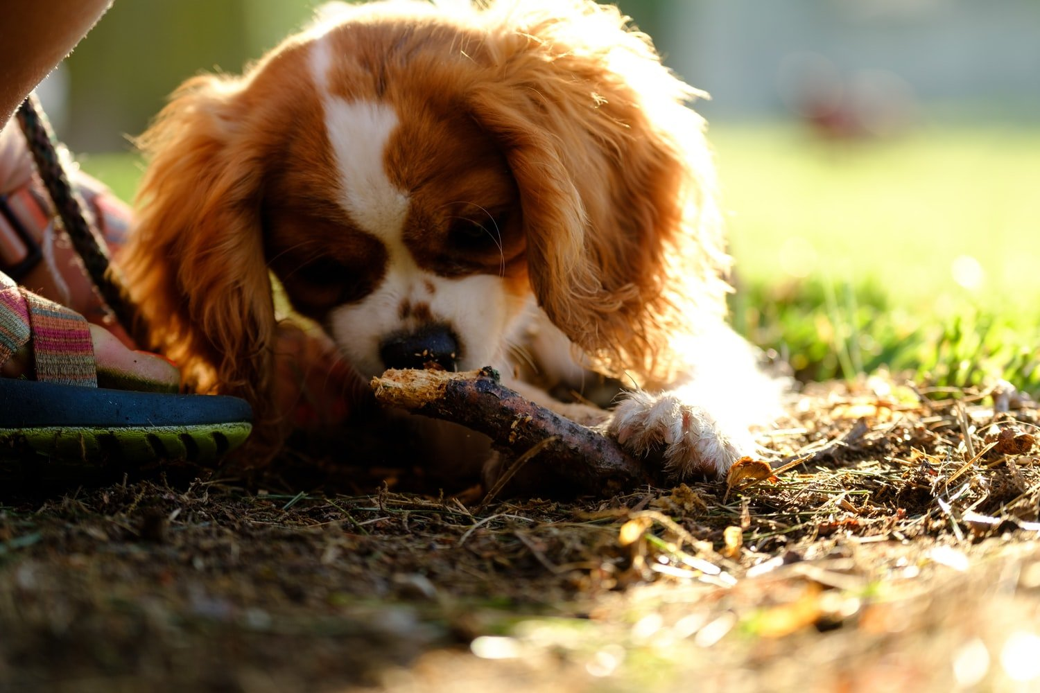 How To Cure Bowed Legs In Puppies