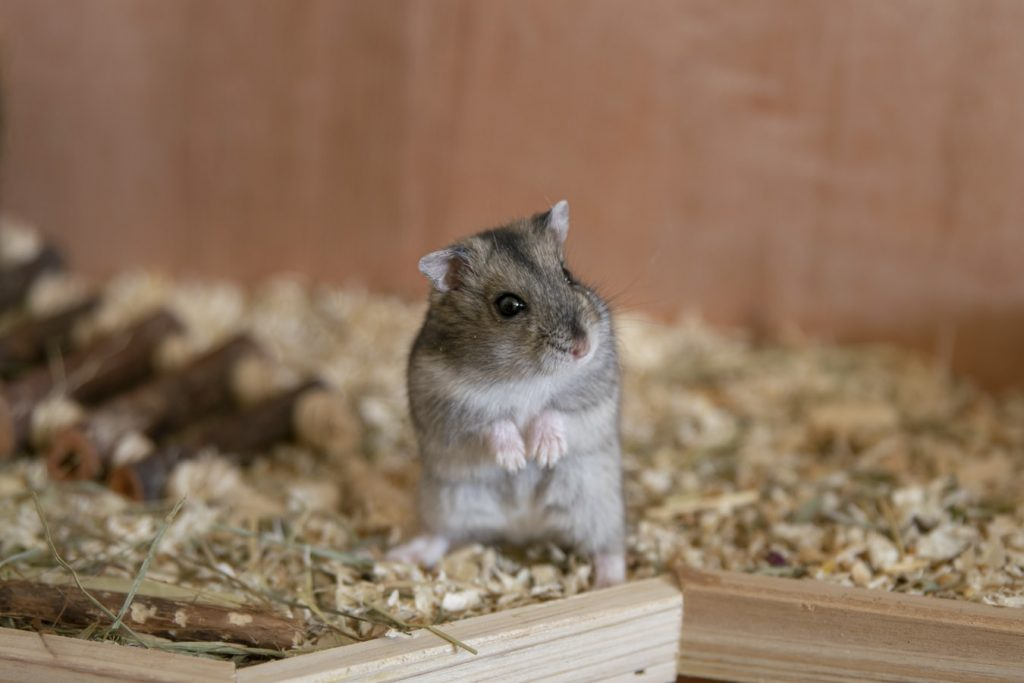 Best Essential Oil For Hamsters