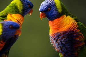 How To Stop Cage Aggression In Birds