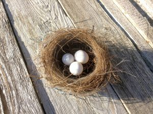 Do Birds Leave Their Eggs Unattended