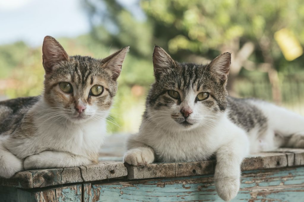 Can a neutered cat live with an unneutered cat