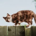 Tips On How To Keep Cat From Jumping Fence