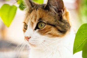 Cat Depressed After Spay