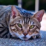 How To Overcome New Cat Owner Anxiety