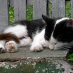 Did I Put My Cat To Sleep Too Soon? (And How To Grieve Effectively!)