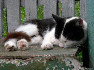 Did I Put My Cat To Sleep Too Soon