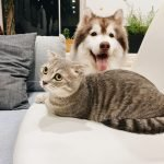 How To Stop Cat From Nursing On Dog (And What To Use!)