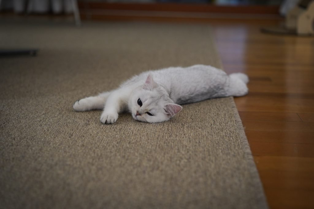 Why Is Cat Acting Strange After Vet Visit