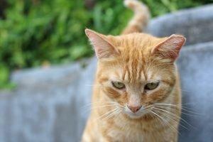 Cat Litter Stuck To Bum