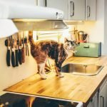 How To Keep Cats Off Stove (And What Works Best!)