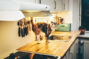 how to keep cats off stoves