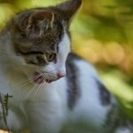 Tips On How To Get A Semi Feral Cat In A Carrier