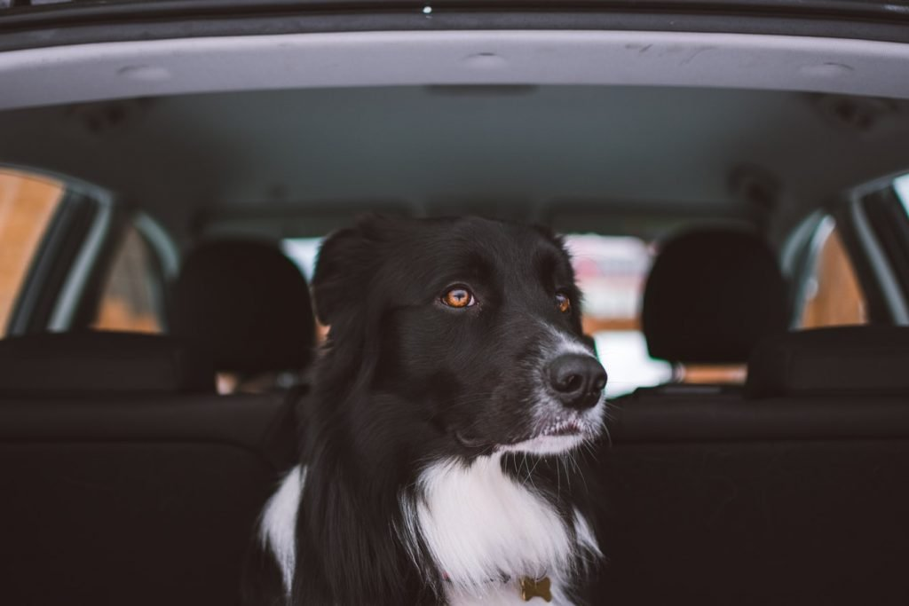 What To Give A Dog For A Long Road Trip