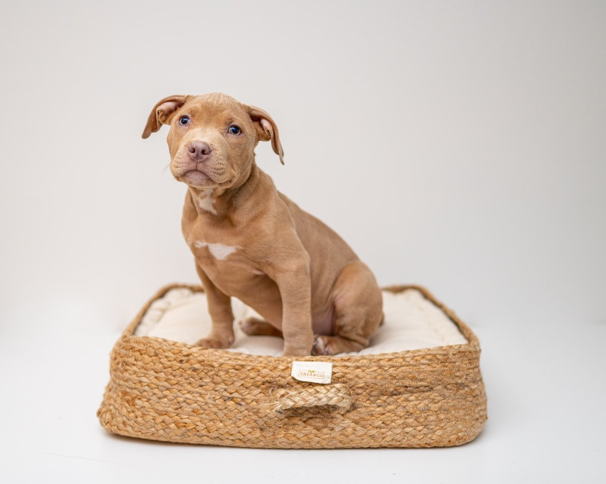 How To Sell A Puppy You Just Bought