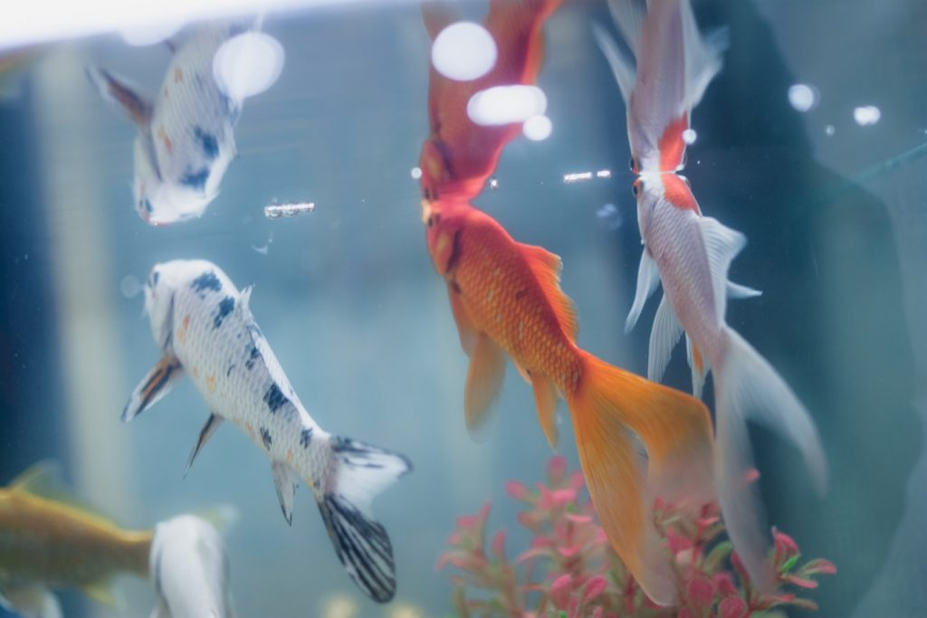 Fish Getting Stuck To Filter Intake