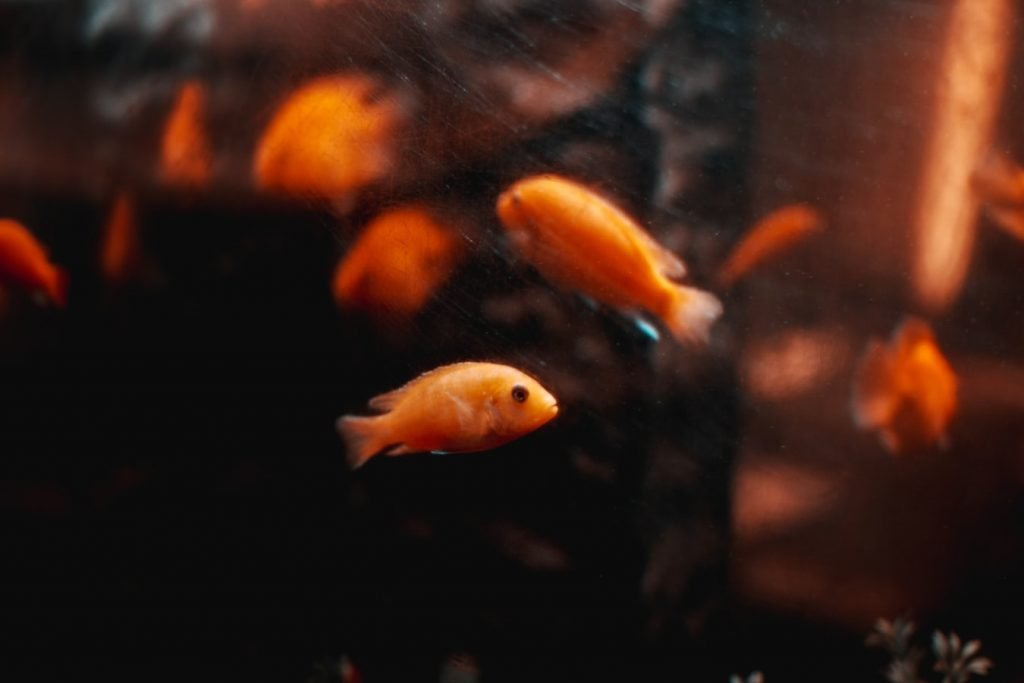 fish staying in corner of tank