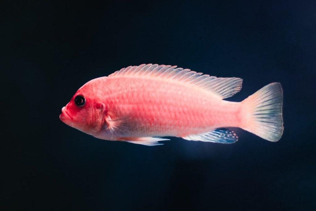 White Balls In Fish Tank