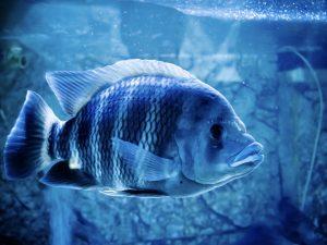 fish staying in corner of tank