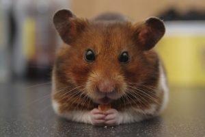 Do Hamsters Sleep More In Winter