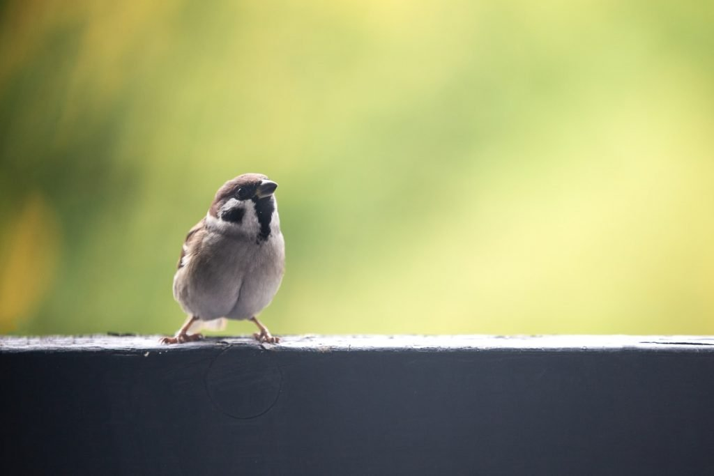 What To Feed A Bird With A Broken Beak