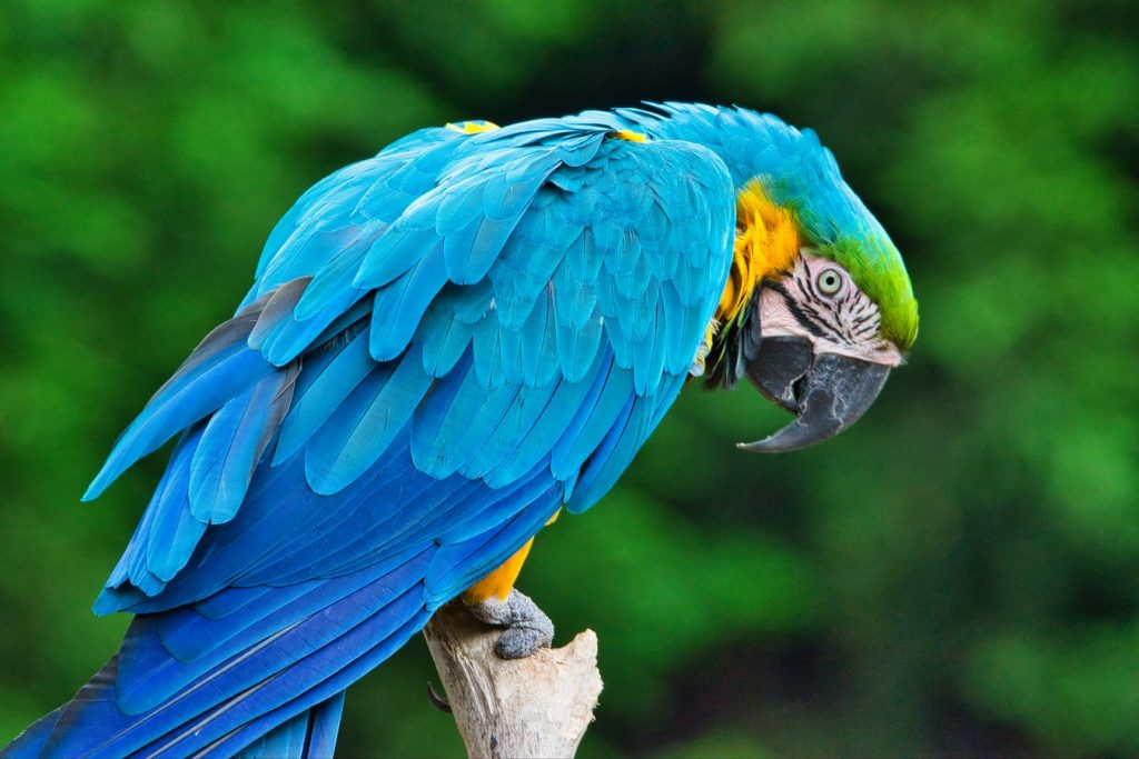 funny things to teach your parrot to say