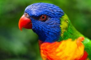 how to get rid of bird odor in house