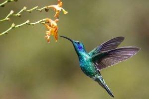 Do hummingbird feeders work