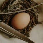 How To Repair A Cracked Egg (And What To Use!)