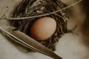 how to repair a cracked egg