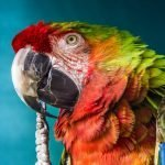 4 Funny Things To Teach Your Parrot To Say! (And What To Use for Training Parrots!)
