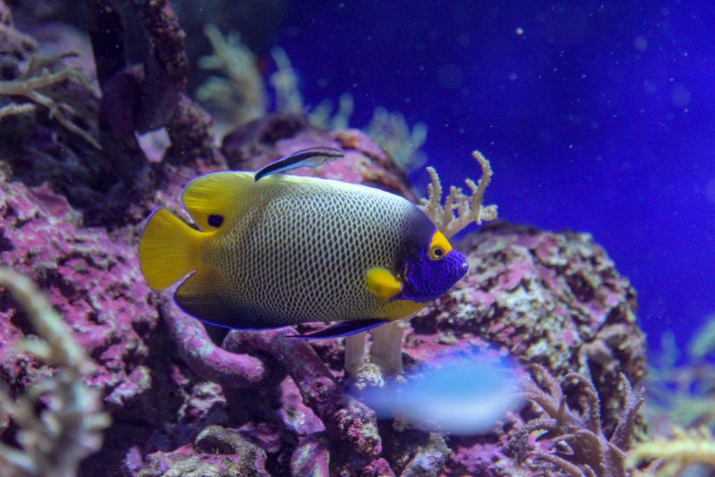 aquarium plants disintegrating