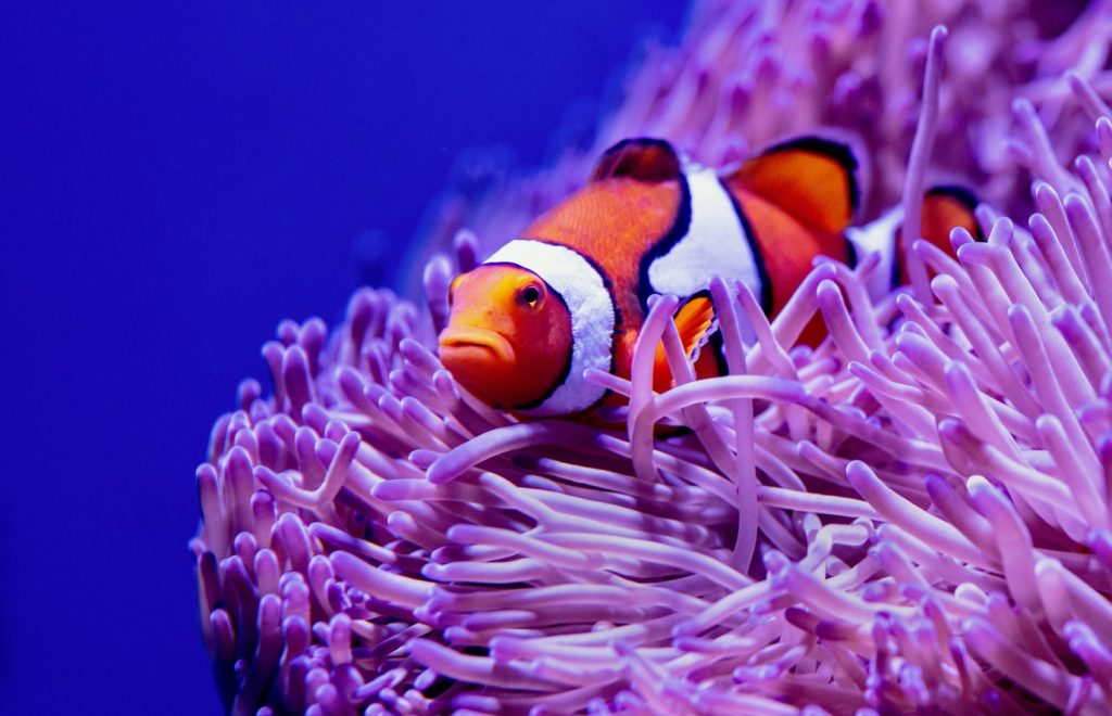 how to increase nitrates in reef tank
