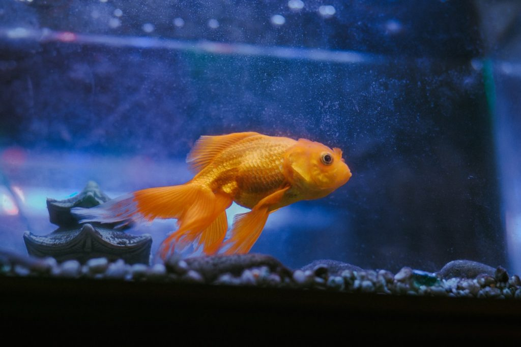 how to revive aquarium plants