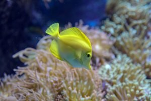 aquarium filter making buzzing noise