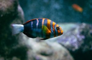 what to put under fish tank