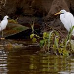 Do Herons Fish At Night? (And How To Stop Them!)