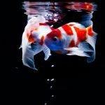 Should You Presoak Fish Food Before Feeding?