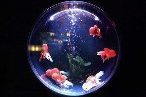 can goldfish have seizures