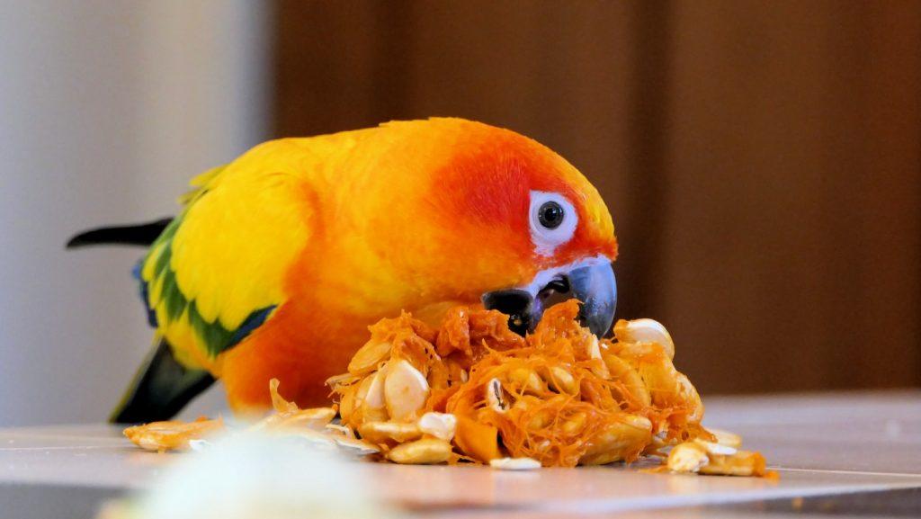 cuddly birds for beginners